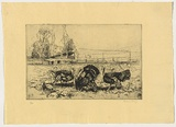 Artist: LONG, Sydney | Title: Turkeys and pumpkins | Date: 1925 | Technique: line-etching and drypoint, printed in black ink with plate-tone, from one copper plate | Copyright: Reproduced with the kind permission of the Ophthalmic Research Institute of Australia