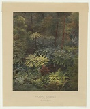 Artist: CAIRE, Nicholas | Title: Fairy scene (Black Spur) Australia c.1888. | Date: c.1878-88 | Technique: photo-lithograph, printed in colour, from multiple stones