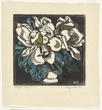 Artist: PRESTON, Margaret | Title: Spring magnolia. | Date: c.1932 | Technique: woodcut, printed in black ink, from one block; hand-coloured | Copyright: © Margaret Preston. Licensed by VISCOPY, Australia