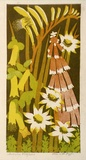 Artist: HIGGS, Florence | Title: Australian wildflowers | Date: c.1954 | Technique: linocut, printed in colour, from four blocks