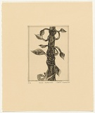 Artist: BLACKMAN, Charles | Title: Jack's beanstalk. | Date: (1977) | Technique: etching and aquatint, printed in black ink, from one plate