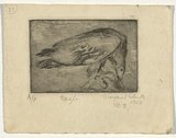 Artist: CILENTO, Margaret | Title: Eagle feeding. | Date: 1950 | Technique: etching and aquatint, printed in black ink with plate-tone, from one plate
