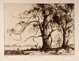 Artist: PRATT, Douglas | Title: Gums on Monaro | Date: c.1932 | Technique: etching, printed in brown ink, from one plate