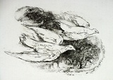 Artist: STRACHAN, David | Title: Birds | Date: 1951 | Technique: etching, printed in black ink, from one plate