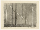 Artist: WILLIAMS, Fred | Title: Fallen tree | Date: 1962 | Technique: etching, engraving, aquatint, drypoint, printed in black ink, from one copper plate | Copyright: © Fred Williams Estate