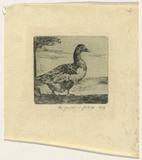 Artist: CRISP, James | Title: The gander. | Date: 1924 | Technique: etching, printed in green ink with plate-tone, from one plate