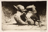 Artist: LONG, Sydney | Title: Young Kookaburras | Date: 1925 | Technique: line-etching and drypoint, printed in dark brown ink, from one copper plate | Copyright: Reproduced with the kind permission of the Ophthalmic Research Institute of Australia