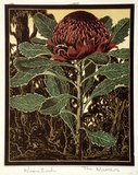 Artist: THE WARNERS | Title: Waratah | Date: c.1940 | Technique: linocut, printed in colour, from multiple blocks