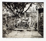 Artist: GLOVER, Allan | Title: The Spreading Bay fig tree | Date: 1931 | Technique: etching and aquatint, printed in brown ink, from one plate