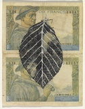 Artist: HALL, Fiona | Title: Fagus sylvatica - Common beech (French currency) | Date: 2000 - 2002 | Technique: gouache | Copyright: © Fiona Hall