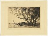 Artist: MORGAN, Squire | Title: Ti trees | Date: 1922 | Technique: etching and aquatint, printed in brown ink with plate-tone, from one plate