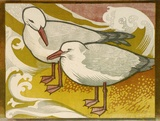 Artist: HIGGS, Florence | Title: Gulls | Date: (1956) | Technique: linocut, printed in colour, from four blocks