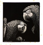 Artist: LINDSAY, Lionel | Title: Macaws | Date: 1938 | Technique: wood-engraving, printed in black ink, from one block | Copyright: Courtesy of the National Library of Australia