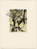 Title: Xanthorrhoea | Date: 2000 | Technique: lithograph, printed in black and buff ink, from two plates